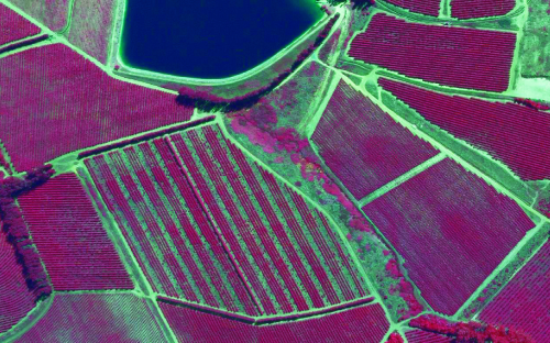 CIR aerial survey image of agricultural vine yards South Africa, captured by Promap Surveys